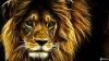 Afrikanisches Reservat: Trixchen´s Reservat