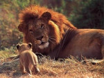 leon - Männlich Löwe (3 Jahre)