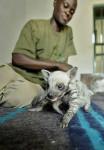 hienas bebes caminando - Gestreifte Hyene (1 Monat)