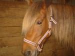 Raïssa - Pony (6 Jahre)
