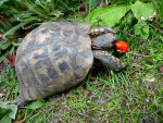 Chloé - Schildkröte (Andere)