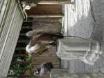 aigle -